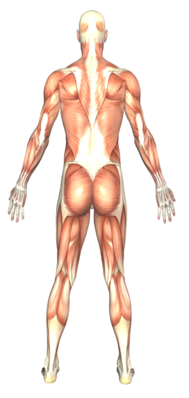 Who We Help, Active Release Techniques, soft tissue injury treatment, sports injury treatment, alternative medicine practice,